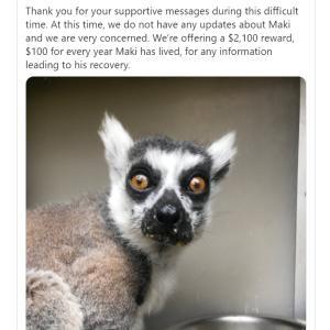 Missing Lemur  いなくなったキツネザル
