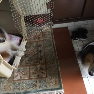 待つ犬(マツケン)サンバ