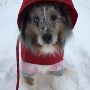 新しき年の初めの初春の 今日降る雪のいやしけ吉事