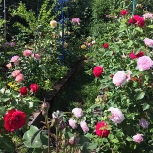 メルヒェンな庭