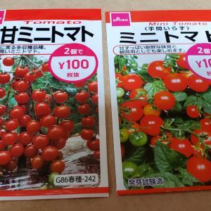 100均ダイソーでトマトの種買いました!