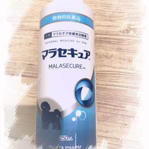 ヨーキー・皮膚炎~初めてマラセキュアシャンプー使ってみた!