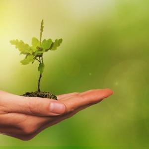 グリーン成長戦略に見る日本の基幹産業の行方