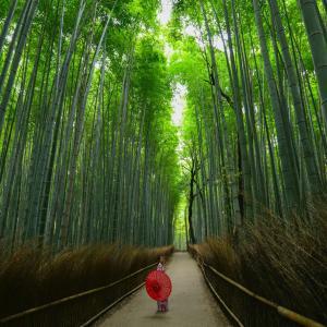 【バゲット】京都のお取り寄せ夏スイーツTOP5! 竹露・クリケットゼリー・錦ろーるetc(8/13)
