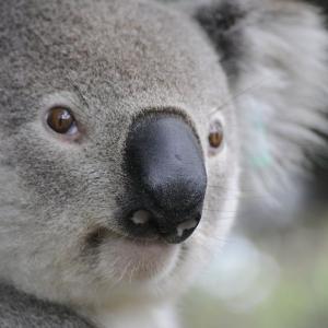 コアラたちに会いに行こう!広大な敷地にユニークな展示がいっぱいの多摩動物公園