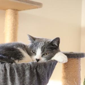 読書をすると眠くなる!眠気を飛ばす技と眠くならない読書術とは