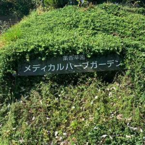 ハーブの香りに癒されて〜薬香草園へ