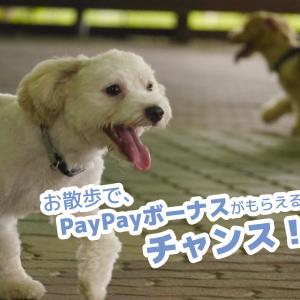 【PayPayボーナス】犬とのお散歩を利用して、お得に参加できるキャンペーン!【WalkCoin】