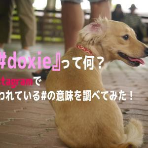 『#doxie』って何? Instagramで使われている#の意味を調べてみた!