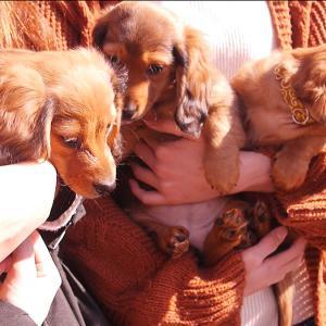犬の多頭飼い暮らし:「おさんぽデビュー」写真レポ