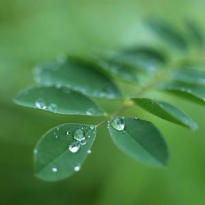私のなまえ香 八十七 緑雨・・