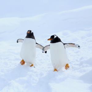 ペンギンは宇宙人だった!?