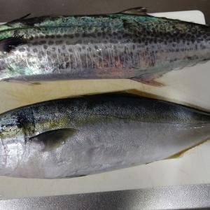たんぱく質の取り方に魚はどうですか?