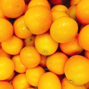【食べて予防】農協職員に聞いた美味しい金柑(きんかん)の選び方