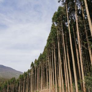 【東京オリパラ】選手村ビレッジプラザに提供された飫肥杉