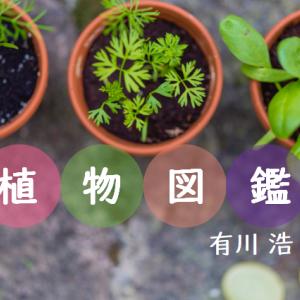 恋と雑草と料理。【植物図鑑】有川浩