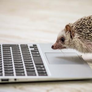 【無料はてなブログ】でアドセンスは合格できるのか?(2020年2月最新)検証してみた