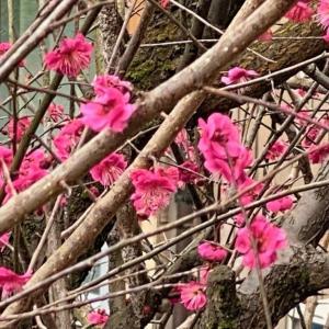 今年の春は