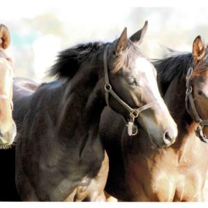 シルクホースクラブ 追加募集 申込み馬発表!
