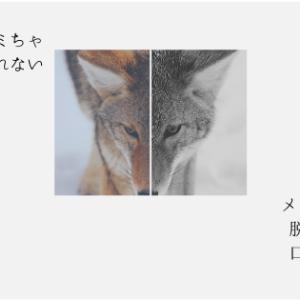 オオカミくんシリーズ第7弾‼︎月とオオカミちゃんには騙されないメンバーまとめ インスタやツイッターも紹介しています