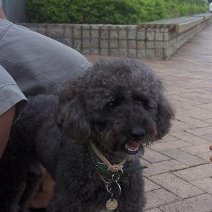 香港の犬好きは必見。香港で犬と触れ合える都会のオアシス
