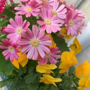 今朝のベランダの花