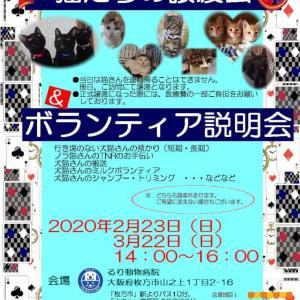 譲渡会お知らせ 2/23 枚方市