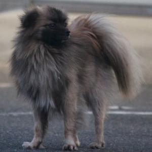 迷い犬【続報】