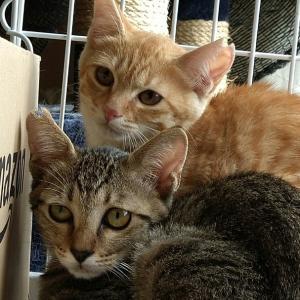 子猫3匹保護