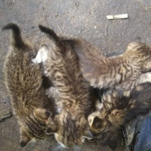 7匹の子ネコ
