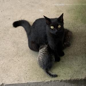 親子猫保護そして別れ