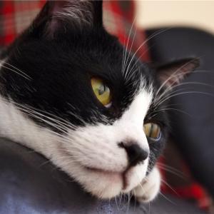 【猫の十戒】思わず笑ってしまう、お猫様から飼い主への10の指令