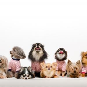 【犬の十戒】涙なしには最後まで読めない!愛犬から飼い主への10のお願いごと