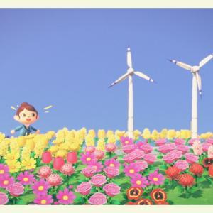 [あつ森:33]崖の上にお花畑ができました!