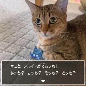 ネコとスライムが出会った!