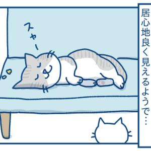 他の猫が寝ている場所は良く見えるの話