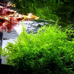 アクアリウム(熱帯魚、甲殻類、水草)に使用する水について解説します。
