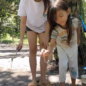 新、ピヨピヨクッキング、あ、御猫様が危ない!/巨大な象竹のタケノコ