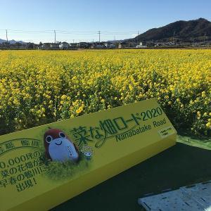 一面の菜の花! 千葉・鴨川「菜な畑ロード」に行きました!
