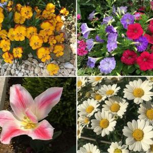 ガーデニング初心者におすすめ! 花壇を彩った育てやすい一年草まとめ【2019~2020春】