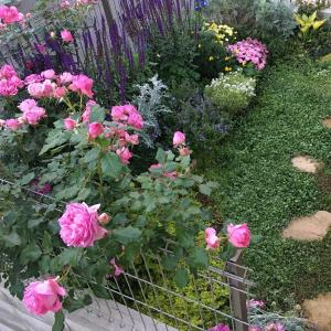 【初心者の庭づくり】庭全体の変遷<南側の庭編>2018年末~2020春