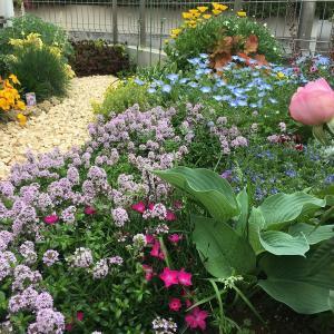 【初心者の庭づくり】庭全体の変遷<北側の庭編>2018年末~2020春