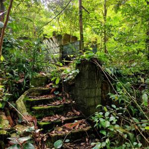 崩れ落ちた住居跡に先人の苦労を想う@Thomson Nature Park