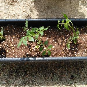 家庭菜園を始める ~ちょっとした癒しを求めて~