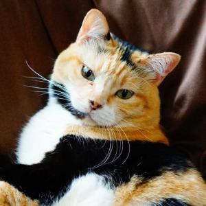 猫は耳かきのフワフワが好き