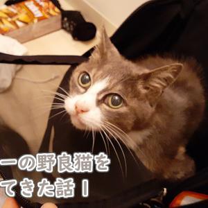 人懐っこいグレー毛色の猫を拾ってきた話1(初めてのお家?)