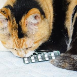 肝臓が悪い愛猫に5ヵ月間「ウルソ」を飲ませ続けた効果について