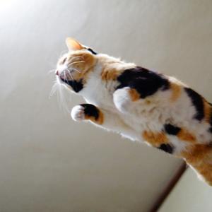 動いてる(ジャンプしてる)猫をブレずに撮る方法!