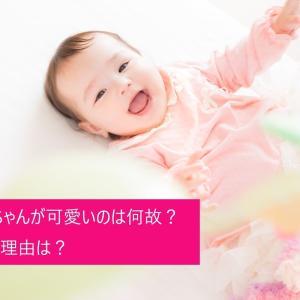 【育児】赤ちゃんが可愛いのは何故?その理由は?