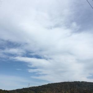 兄くん弟くんと山を散歩してきた3